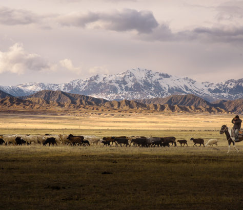 Troupeau moutons Tian Shan Kirghiztan