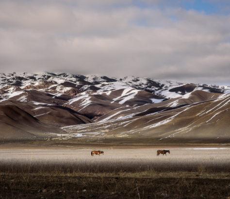 Avril dans les steppes au Kirghizstan