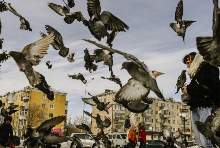 Stepnogorsk Kazakhstan Pigeon
