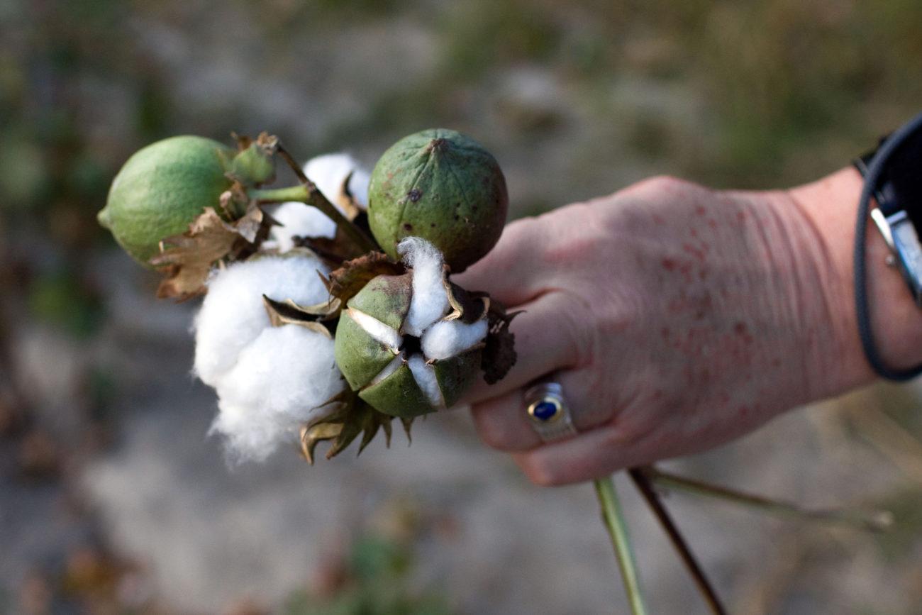 Coton Ouzbékistan Main Economie URSS Monoculture