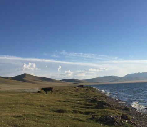 Song Koul Vache Kirghizstan Lac Eau Montagne
