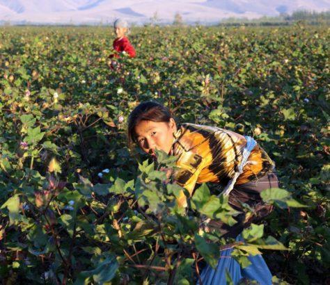 Recours Travail Enfants Problème Kirghizstan