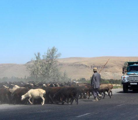 Djizak Ouzbékistan Mouton Route
