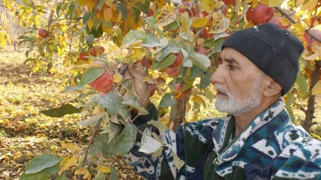 Mizochokh Akobirov Cultivateur Pommes Tadjikistan