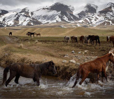 Elevage de chevaux au Kirghizstan