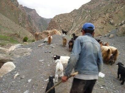 Asie Centrale, Tadjikistan, berger, mutton, montagne