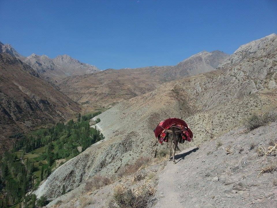 Voru Tadjikistan Âne Chemin Montagne