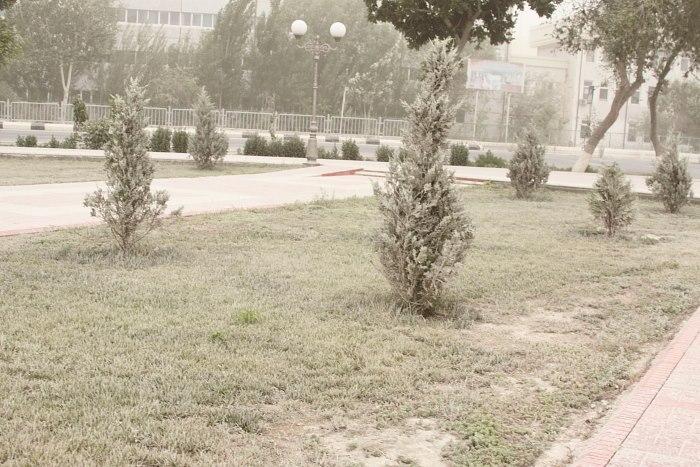 noukous sel tempête buisson Ouzbékistan