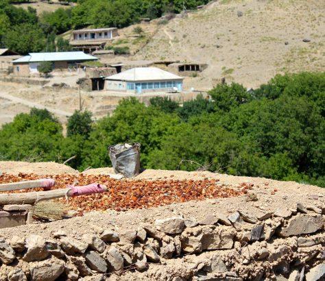Ouzbékistan fruits séchés villages