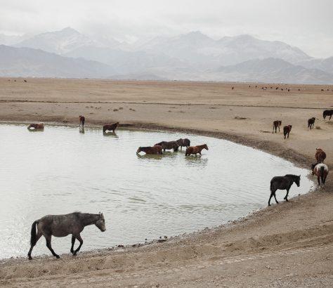 Des chevaux assoifés se désaltèrent à un point d'eau à 20km de Naryn au Kirghistan.