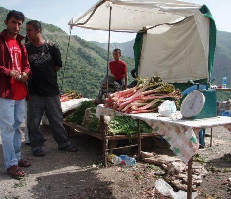 Rhubarbe Tadjikistan col Char-Char Nourek