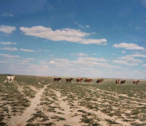 Les chevaux de la steppe