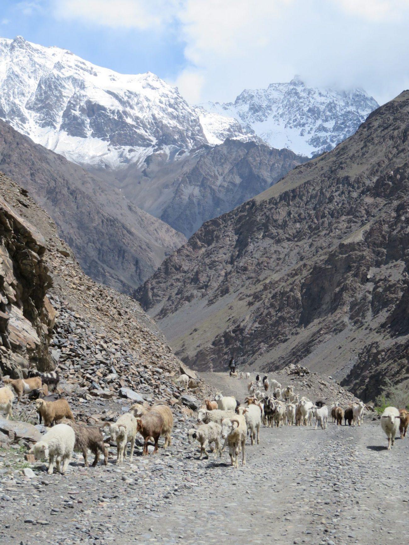 Elevage Pamir Tadjikistan Photo du Jour