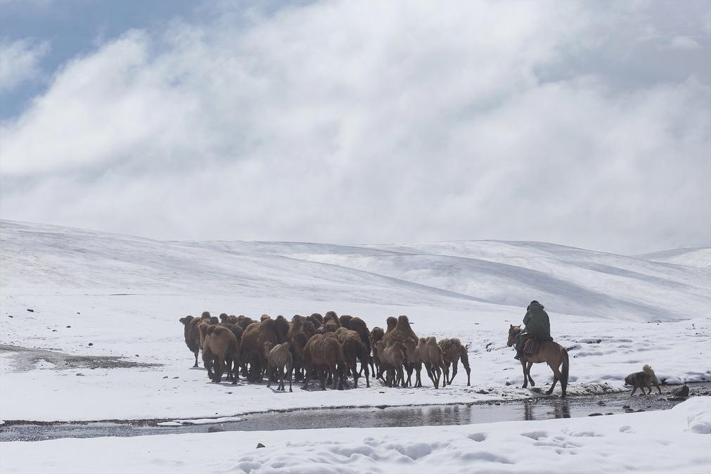 Chameaux Kirghizstan At-Bashi Berger