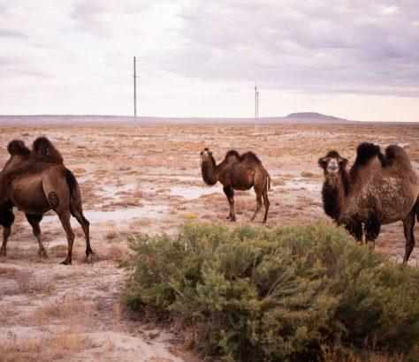 Mer d'Aral Kazakhstan désert chameaux