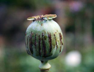 Asie centrale Opium Drogue histoire Conflits pavot trafic frontière