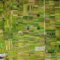 Agriculture Ouzbékistan Economie Libéralisation France entreprises Medef-International