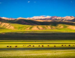Prairies Asie centrale Environnement Réchauffement climatique Menace