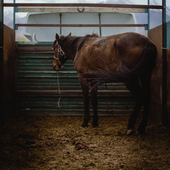 Kirghizistan antoine Béguier naryn marché au bétail