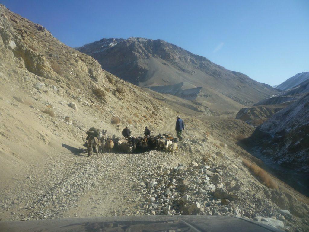 Troupeau Route Tourisme Tadjikistan Campagnes Environnement Développement Economie