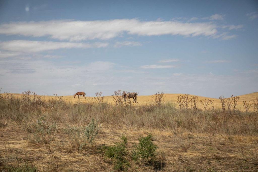 Kazakhstan Braconnage Garde-forestier Environnement