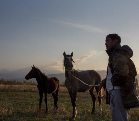 Kirghizstan chevaux