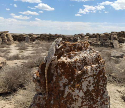 Un lézard prenant un bain de soleil - bien camouflé - sur une pierre tombale Oust-Ourt Ouzbékistan