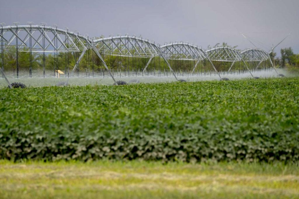 Kazakhstan Environnement Lac Bartogaï Champs Soja Irrigation