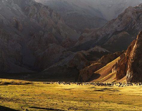 Kirghizstan cheval troupeau steppe
