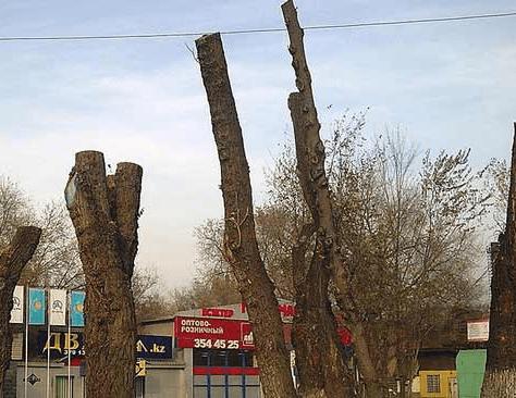 Kirghizstan Bichkek Elagage Héros verts