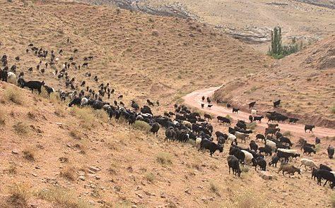 Turkmenistan Nohur Ahal Agriculture Betail Secheresse Meteo Ferme