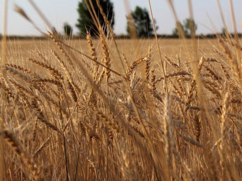 Location Vente Terres agricoles Kazakhstan Interdiction