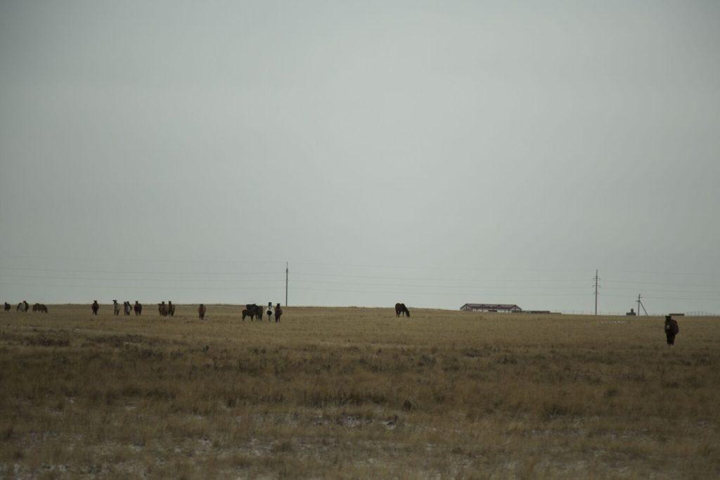 Kazakhstan Aksou Or Environnement Société Pâturages