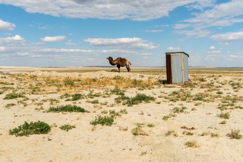 mer d'Aral chameau immobile désertification région