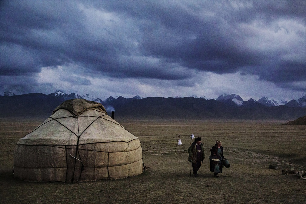 Kirgizstan vaches coupls lait