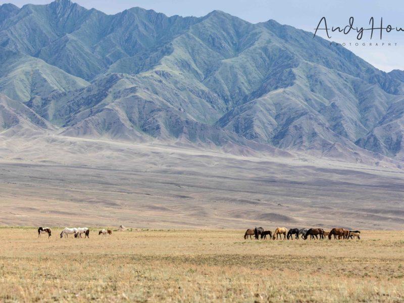 montagnes canyon chevaux paysage kazakhstan charyn