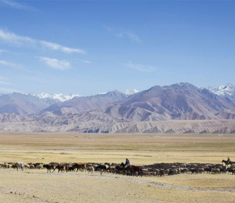 Kirghizstan Vallée Montagnes Troupeaux