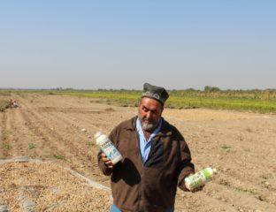 Tadjikistan Pesticides Agriculture