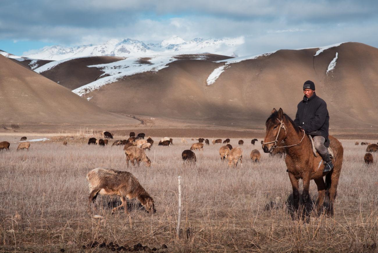 kirghizstan village cheval troupeau berger