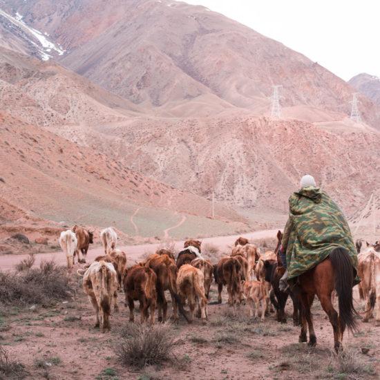 Vallée caractéristique berger troupeau vallée couleur caractéristique Kyzyl-Oï Kirghizstan
