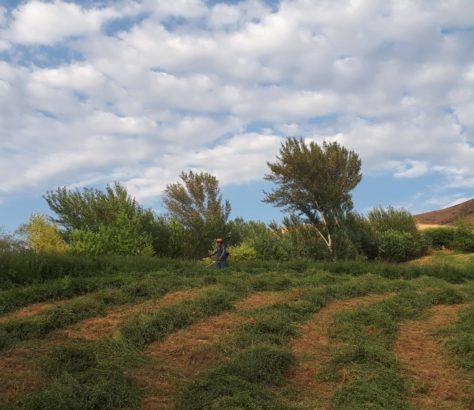 Photo du jour Kirghizstan Champs Agriculture
