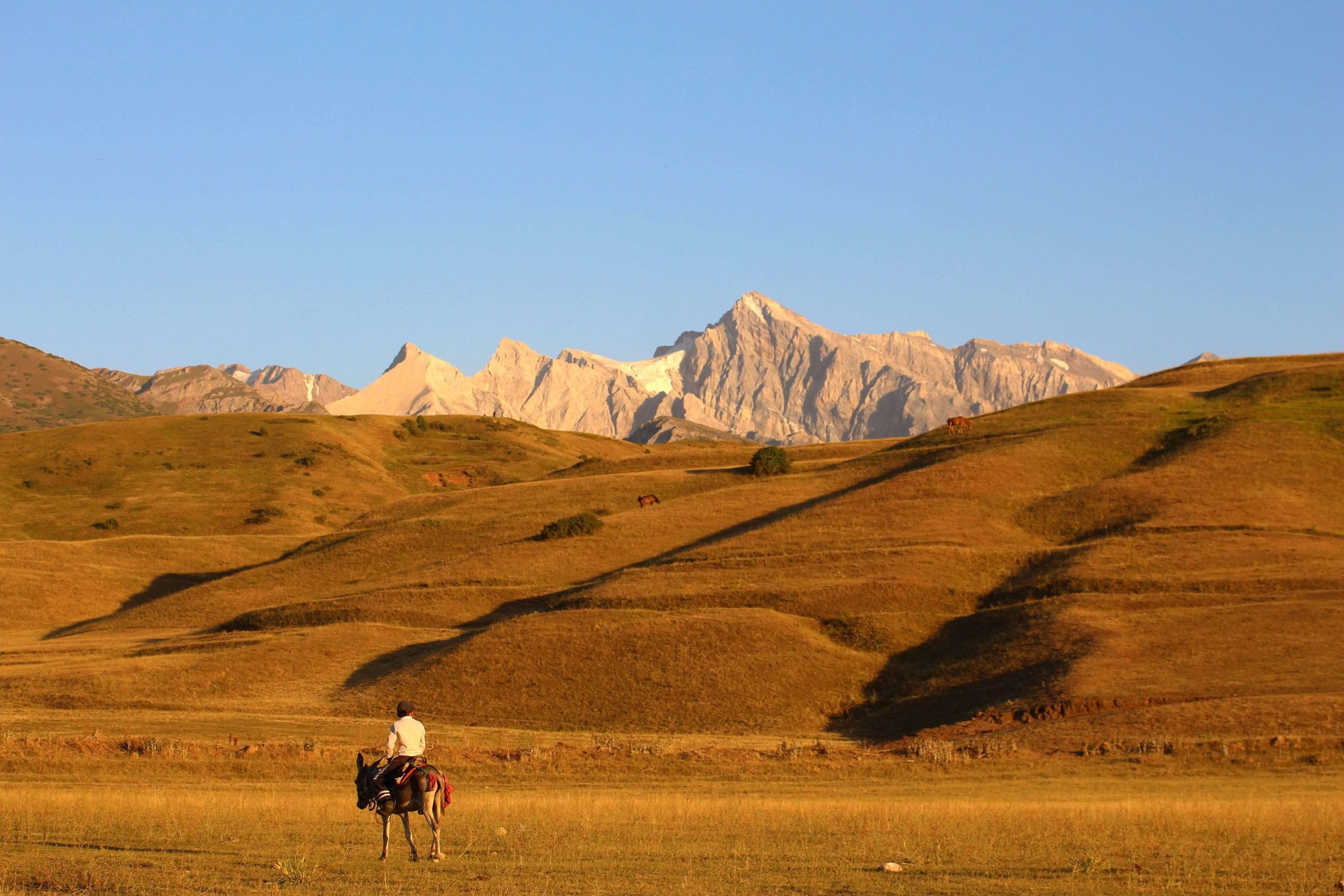 Chimkent, Kazakhstan, Garçon, Montagne, Cheval, Photo du jour
