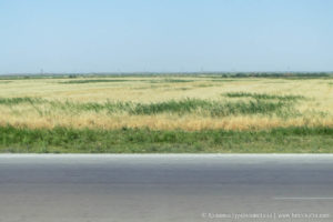 champs blé courts route