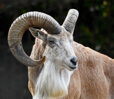 Tadjikistan Environnement Liste rouge des espèces menacées