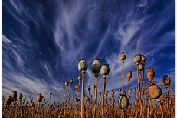 Drogue, afghanistan, asie centrale