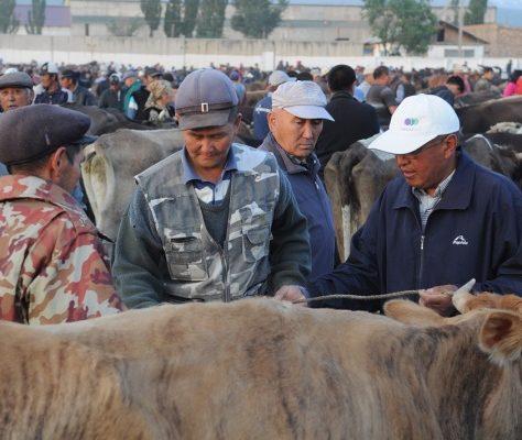 bazar, marché à bestiaux, Karakol, KIrghizstan